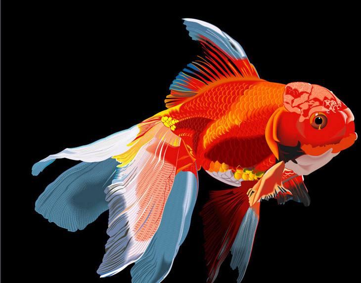 观赏鱼药品特性和种类其一